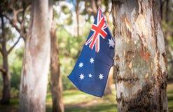 Australian flag on eucalyptus tree in bush Royalty Free Stock Photos