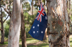 Australian flag in trees. Stock Image