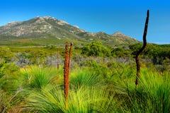 Australian Flora. At Wilsons Promontory Stock Photo