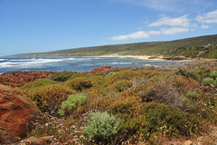 Australian flora Stock Images