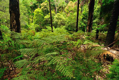 Australian forest Royalty Free Stock Image