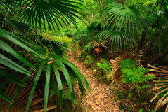 Australian forest Stock Photography