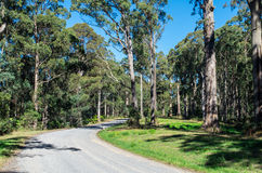 Australian forest gravel road near Warburton, Victoria Stock Images