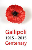 Australian Gallipoli Centenary, WWI, April 1915, tribute with red poppy lapel pin badge. On white background with sample text Royalty Free Stock Photo