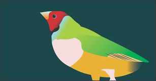 Australian Gouldian Finch. Little bird vector illustration
