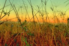 Australian grass background Royalty Free Stock Image