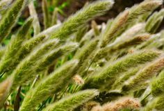 Australian Green Grasses Stock Photo