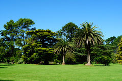 Australian green park landscape Royalty Free Stock Photos