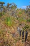 Australian heathland Royalty Free Stock Images