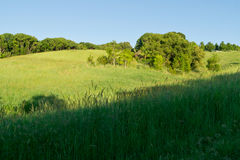 Australian hinterland meadow Royalty Free Stock Image