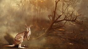 Australian Kangaroo wildlife in the fire cinemagraph