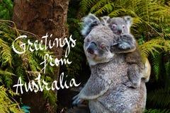 Australian koala bear native animal with baby and Greetings from Australia text. Australian koala bear native animal with baby on the back and Greetings from vector illustration