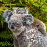 Australian koala bear native animal with baby and Happy Australia Day greeting. Australian koala bear native animal with baby on the back and Happy Australia Day stock illustration