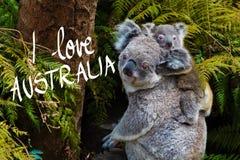Australian koala bear native animal with baby and I Love Australia text. Australian koala bear native animal with baby on the back and I Love Australia text vector illustration
