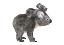 Australian Koala Bears stock illustration