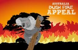 Australian Koala In Bushfire - Australian Bush Fire Appeal Stock Photography