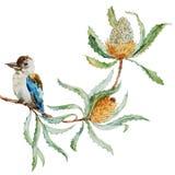 Australian kookaburra bird Stock Photo