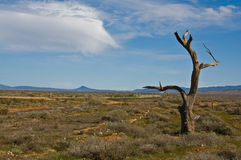 Australian landscape Royalty Free Stock Photography