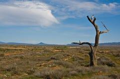 Australian landscape royalty free stock photography