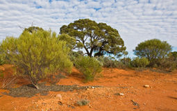 The australian landscape Royalty Free Stock Image