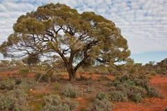 The australian landscape stock images