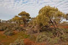 The australian landscape Stock Photos
