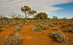 The australian landscape Royalty Free Stock Photography