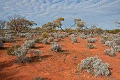 The australian landscape royalty free stock photo