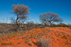 Australian landscape Royalty Free Stock Images