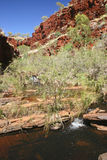 Australian landscape. Green bushes with a stream water surrounded with red rocks. Australia Stock Image
