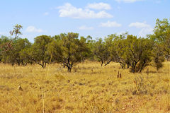 Australian Landscape - grass in Bungle Bungles (Purnululu) Royalty Free Stock Images