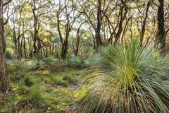 Australian Landscape Royalty Free Stock Photo