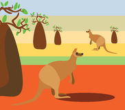 Australian landscape with kangaroos. And bottle trees Royalty Free Stock Image