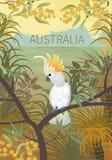 Australian landscape  poster. Royalty Free Stock Photos