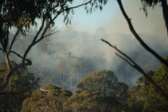 Australian landscape with smoke. Australian forest with smoke. Gum trees Royalty Free Stock Images
