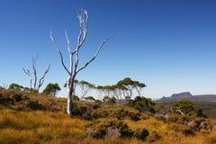 Australian landscape in Tasmania. Australian landscape near Cradle Mountain National Park in Tasmania Royalty Free Stock Photography