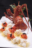 Australian lobster royalty free stock images