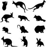 Australian marsupial animals. Animals marsupials live in Australia, is Australia's unique animals Royalty Free Stock Images