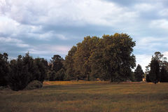 Australian Meadow with Trees Royalty Free Stock Photo