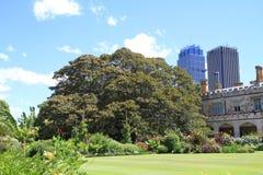Australia/Sydney: Park with Moreton Bay Fig Tree Royalty Free Stock Photography