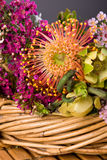 Australian Native Flowers Stock Image