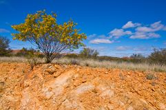 Australian outback Royalty Free Stock Photos