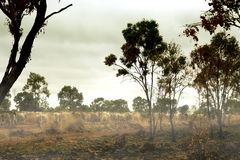 Australian outback. A landscape view of rural countryside or outback of Australia royalty free stock photo
