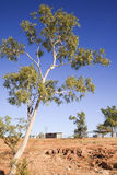 Australian Outback Eucalyptus and Outbuildings Royalty Free Stock Images