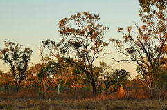 Australian Outback in the Evening. A typical outback scene, lit by warm soft light in the evening Stock Images