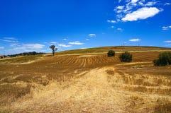 Australian outback field landscape Royalty Free Stock Photo
