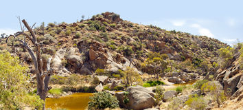 Australian Outback Oasis Royalty Free Stock Image