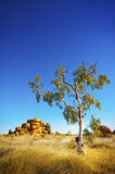 Australian Outback. View of the beautiful landscape in the Australian outback Stock Images