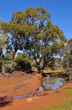 water hole Australian outback Stock Photography