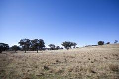 Australian paddock. A paddock on a farm in outback australia Stock Photo
